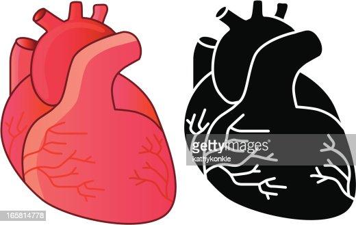 Human Heart Vector Art | Getty Images