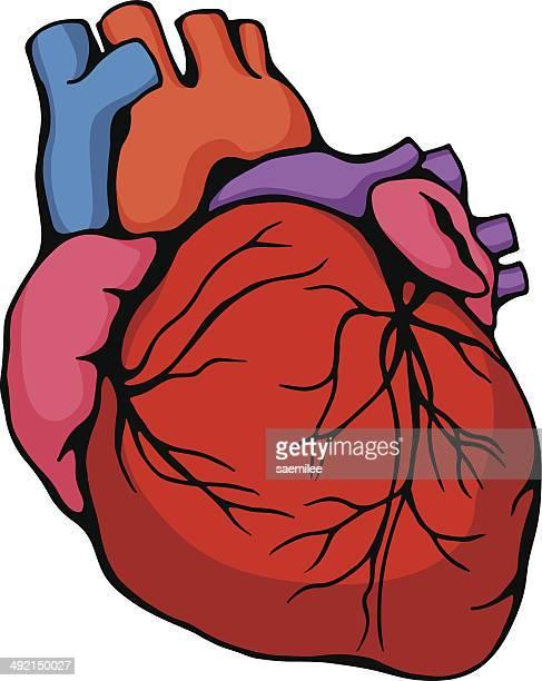human heart - animal heart stock illustrations, clip art, cartoons, & icons