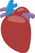 Human heart vector illustration.