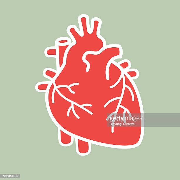 human heart vector - anatomy stock illustrations