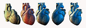 Human heart wireframe in various view point illustration