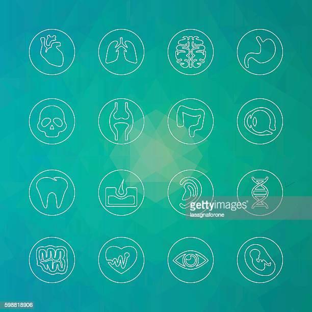 human icons - thin line - circle - human intestine stock illustrations, clip art, cartoons, & icons