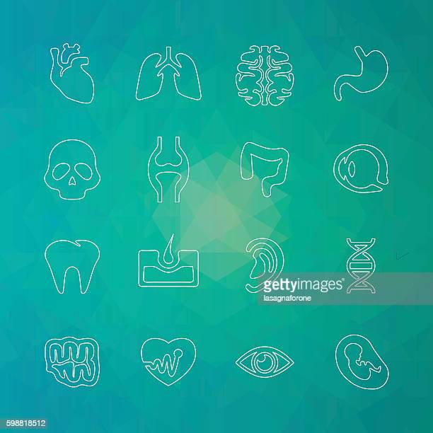 human icons - thin line - joint body part stock illustrations, clip art, cartoons, & icons