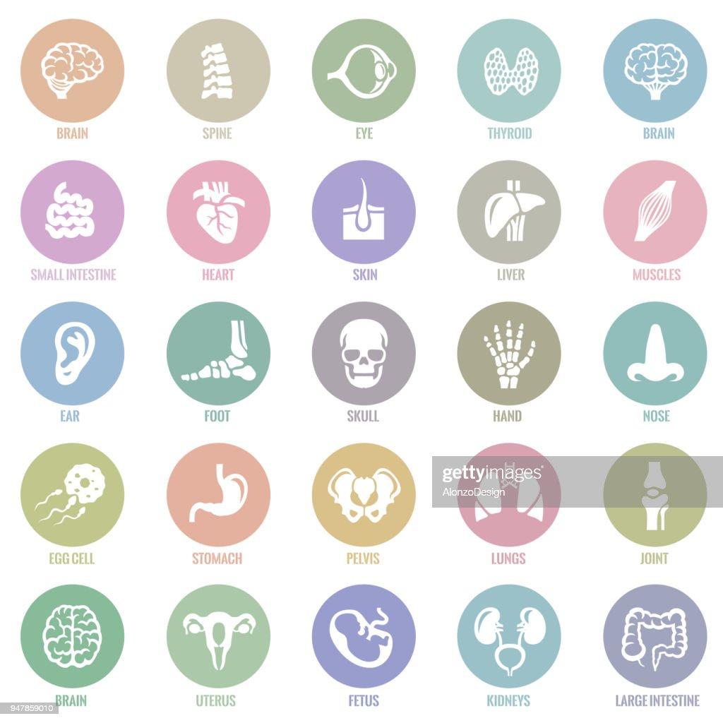 Human internal organ Icons : stock illustration