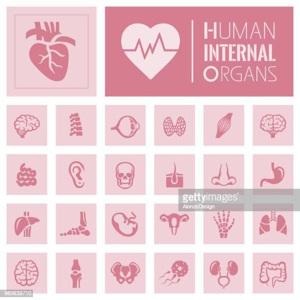 人間の臓器のアイコン - ヒトの胚点のイラスト素材/クリップアート素材/マンガ素材/アイコン素材