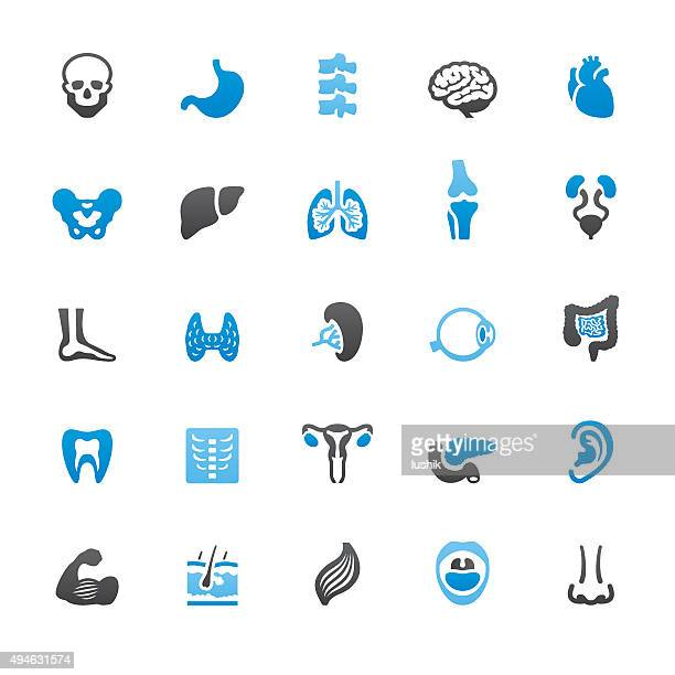 Human Internal Organ related vector icons