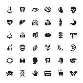 Human Internal Organ vector symbols and icons