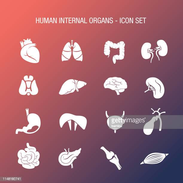 human internal organs icon set coral and navy gradient - physiology stock illustrations