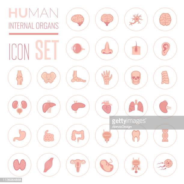 illustrations, cliparts, dessins animés et icônes de les organes internes humains icon set - organe interne humain