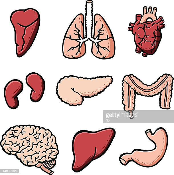 human internal organs - tissue anatomy stock illustrations, clip art, cartoons, & icons