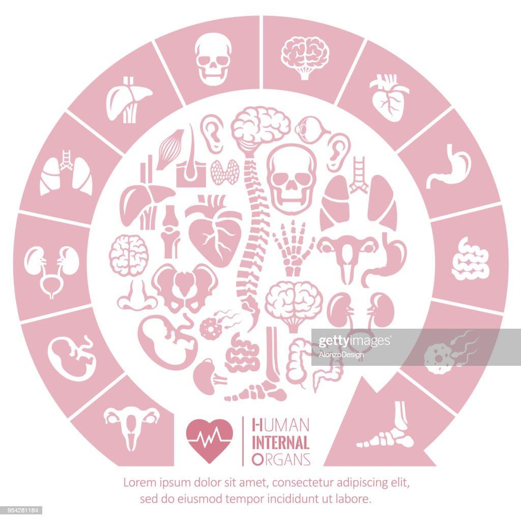 Os órgãos internos : Ilustração