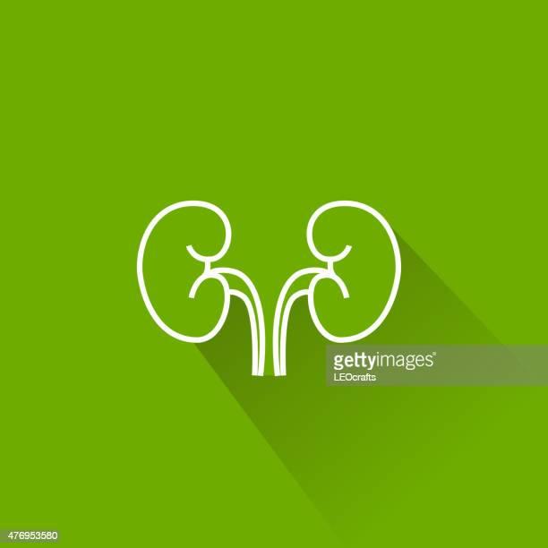 human kidney icon - human kidney stock illustrations, clip art, cartoons, & icons