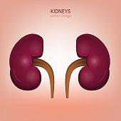 Human kidney image
