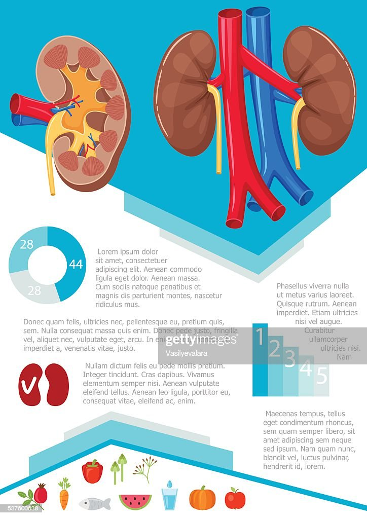 Human kidney infographic vector art getty images human kidney infographic vector art ccuart Images