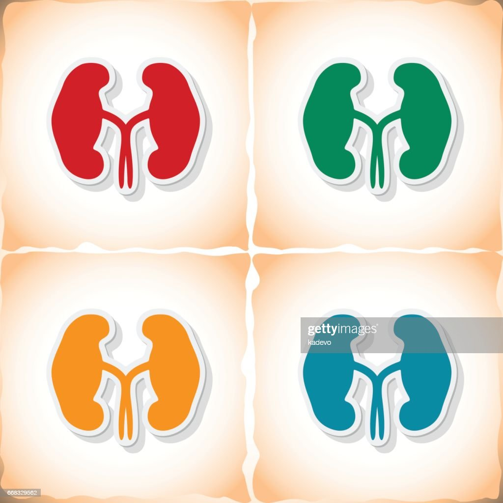 Human kidneys. Flat sticker with shadow on old paper