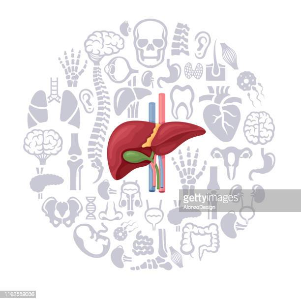 human liver collage - tissue anatomy stock illustrations, clip art, cartoons, & icons