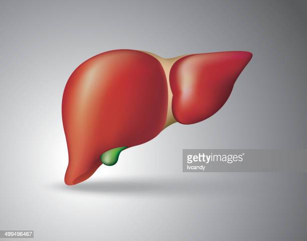 human liver - human liver stock illustrations, clip art, cartoons, & icons