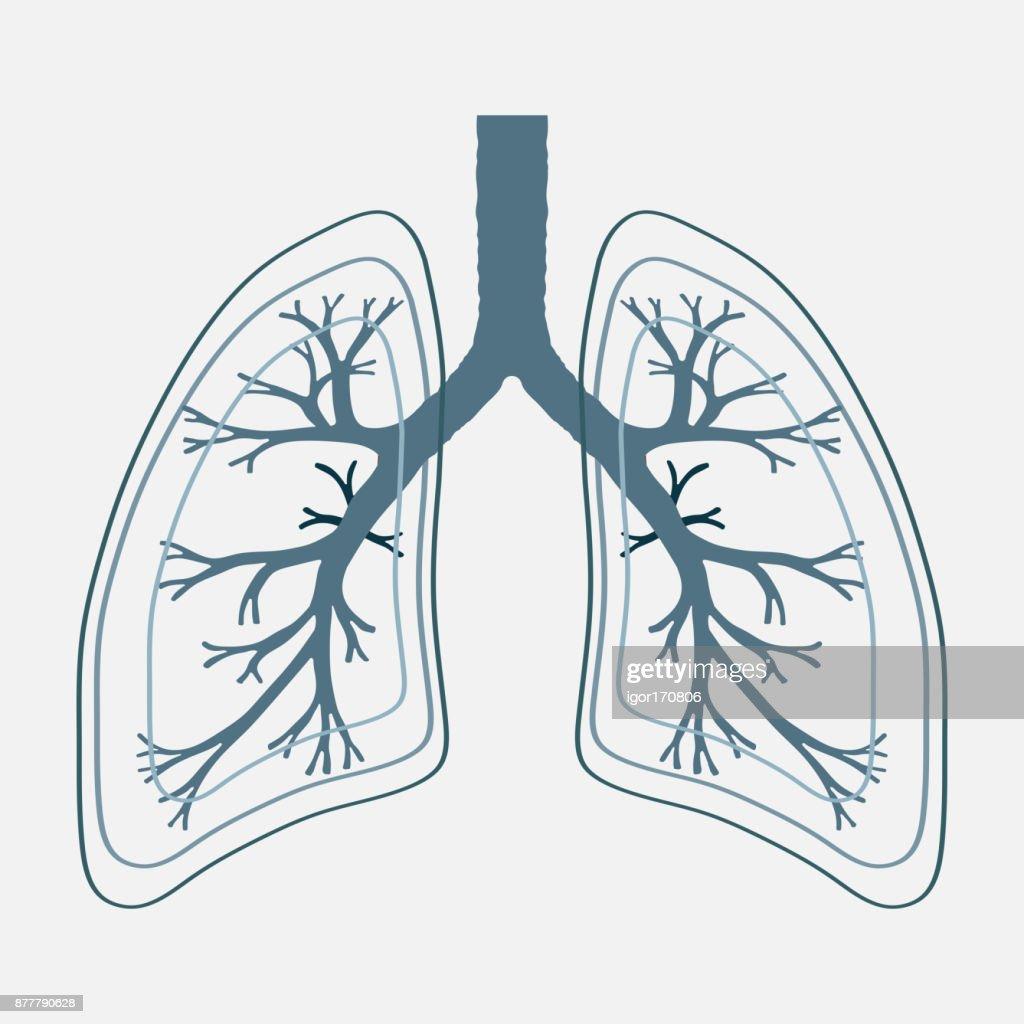 Menschliche Lunge Anatomie Abbildung Krankheit Krebs Der Atemwege ...