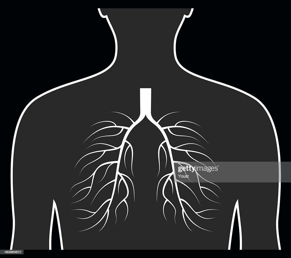 Human Lungs Concept. : stock illustration