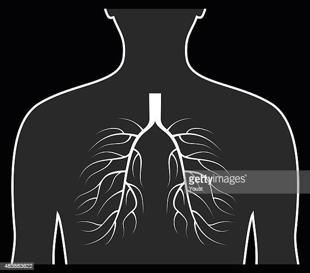 human lungs concept. - chest torso stock illustrations, clip art, cartoons, & icons