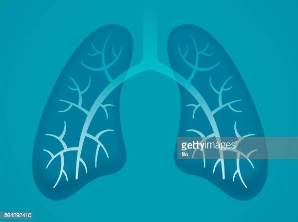 human lungs - lung stock illustrations