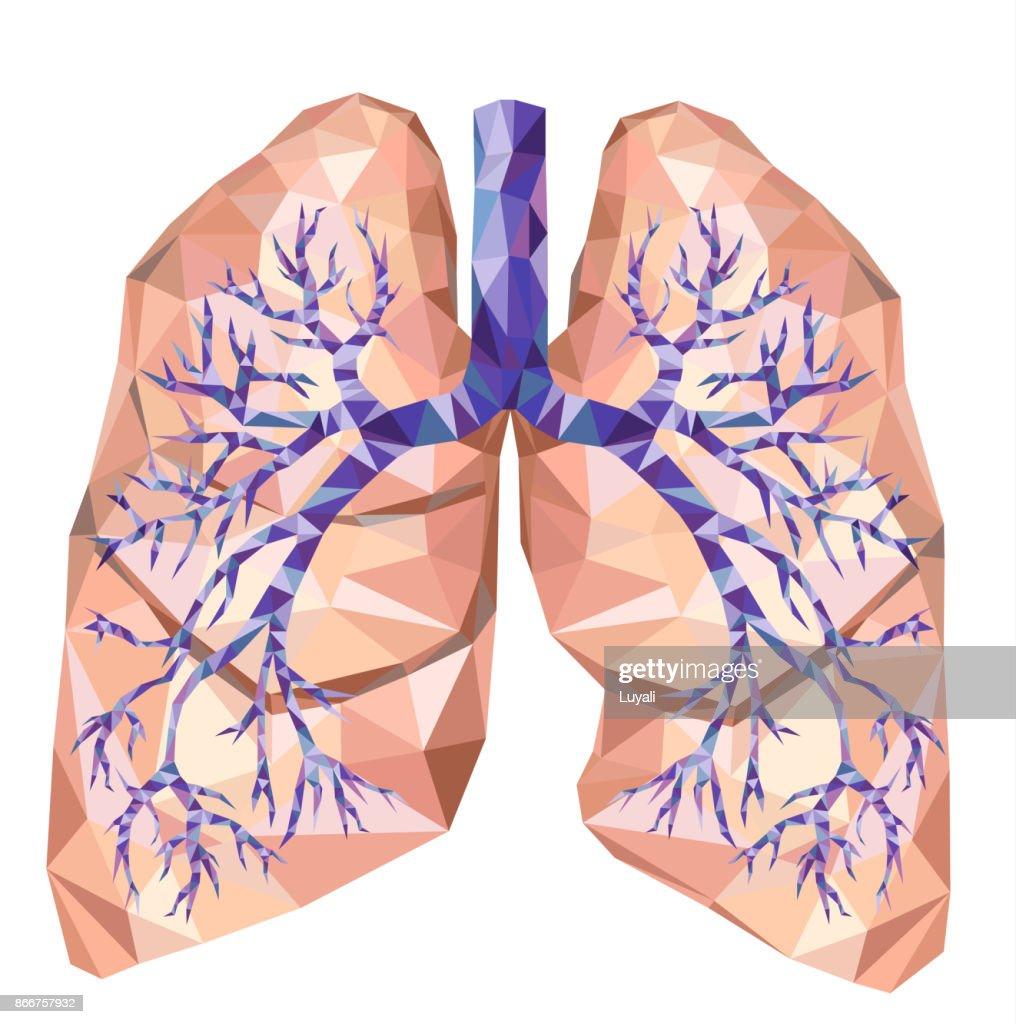 Tolle Menschliche Lunge Bilder - Anatomie Von Menschlichen ...