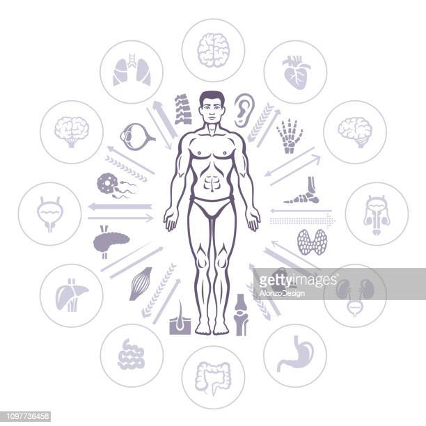 human male body and healthcare infographic - prostate gland stock illustrations, clip art, cartoons, & icons