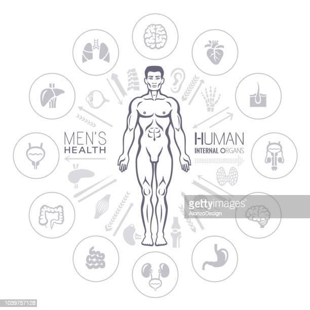 human male body and internal organs - frontal lobe stock illustrations, clip art, cartoons, & icons