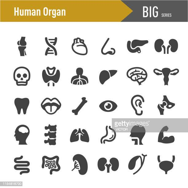 human organ icons - big series - human nose stock illustrations
