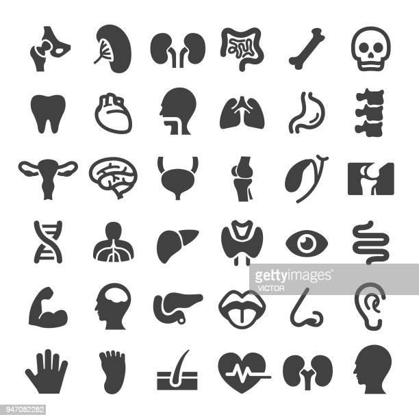 human organ icons - big series - the human body stock illustrations