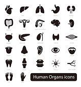 Human Organs icon set, vector illustration
