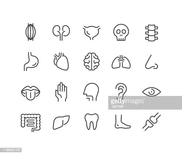 human organs icons - classic line series - intestine stock illustrations
