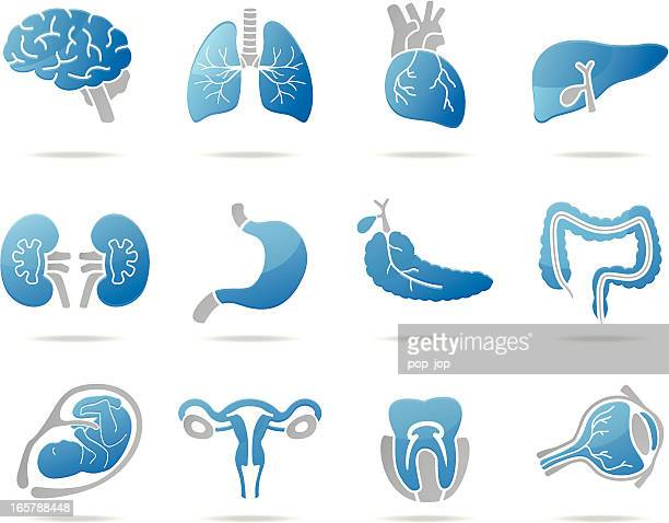 Human Internal Organ Stock Illustrations And Cartoons Getty Images