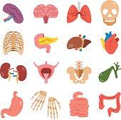 Human organs set. Bones, internal organs vector icons. Flat design