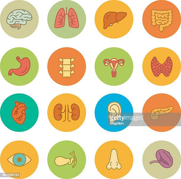human organs vector icons set - human liver stock illustrations, clip art, cartoons, & icons