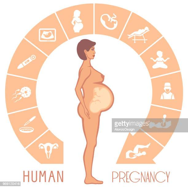 human pregnancy - artificial insemination stock illustrations