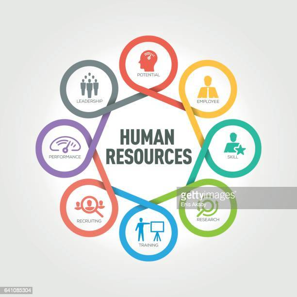 Human Resources infographic with 8 steps, parts, options