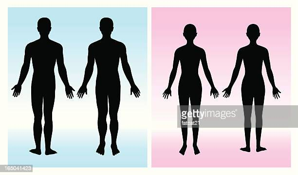 human silhouette - the human body stock illustrations