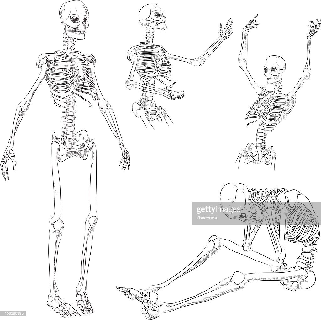 Human Skeleton Drawing Vector Art Getty Images