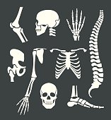 Human skeleton. Vector white illustration set