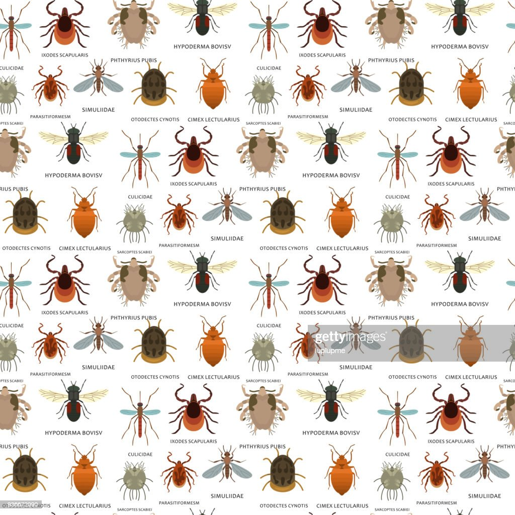 Human skin parasites vector housing pests insects disease parasitic bug macro animal bite dangerous infection medicine pest seamless pattern background illustration