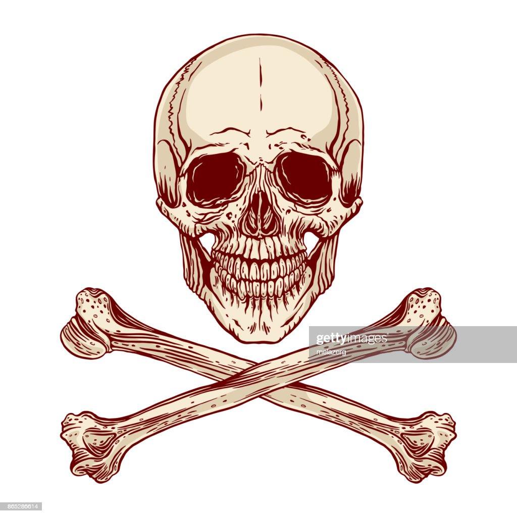 human skull and crossbones
