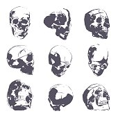 Human skull in rough sketch. Man head anatomy hand-drawn vector illustration. Skeleton bone part drawing.
