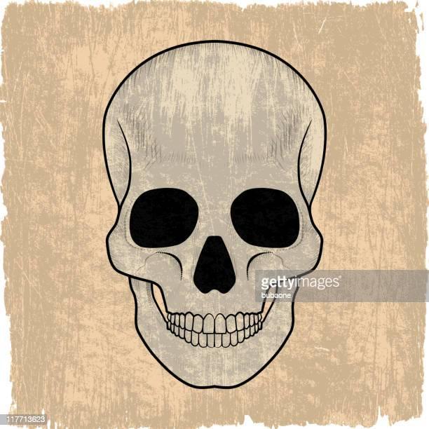 Cráneo humano en vectoriales sin royalties de fondo