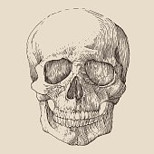 human skull, vintage illustration, engraved retro style, hand drawn, sketch