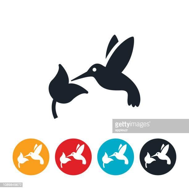 Hummingbird Icon