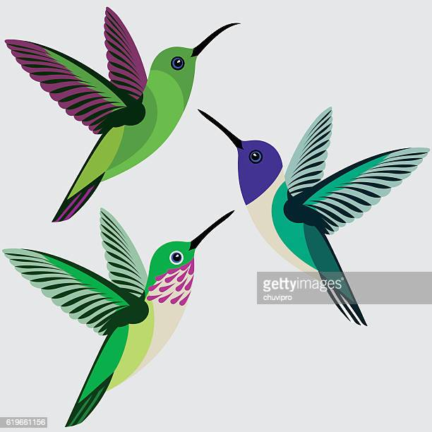 hummingbirds set - green-breasted mango, white-necked jacobin, calliope hummingbird - hummingbird stock illustrations, clip art, cartoons, & icons