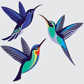 Hummingbirds Set - Violet Sabrewing, Green Hermit, Fiery-throated Hummingbird