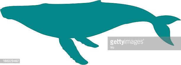 humpback whale silhouette - whales stock illustrations, clip art, cartoons, & icons
