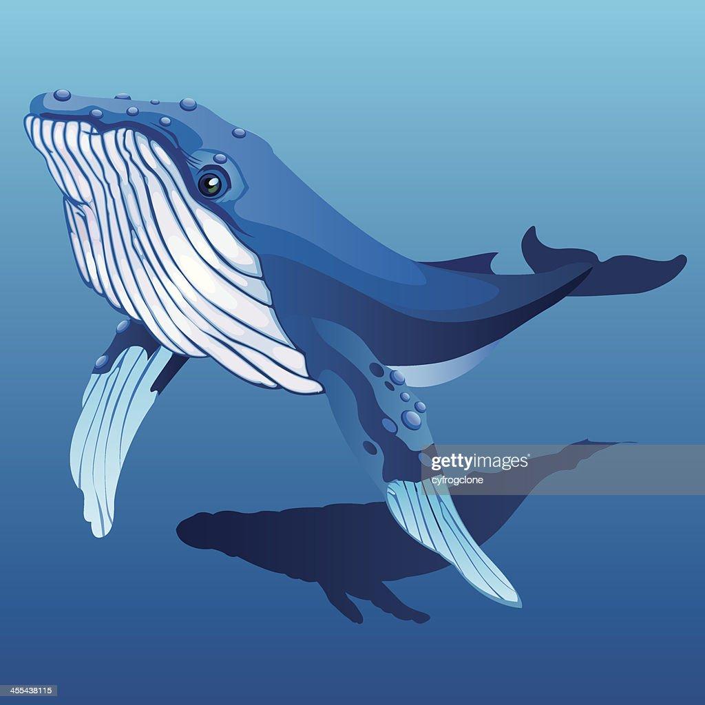 Humpback whale : stock illustration